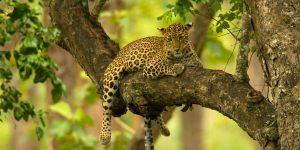 sri lankan riders wild life yala horton plains national park safari