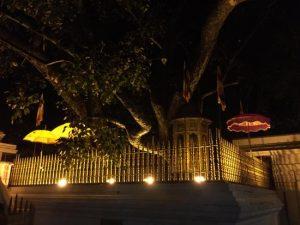 Anuradhapura ancient city unesco heritage site sri lanka sri maha bodhiya