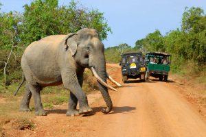 sri lanka yala national park wildlife