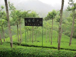 Pedro Tea Estate and Around