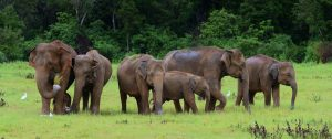 Udawalawa Day Tour Sri Lanka