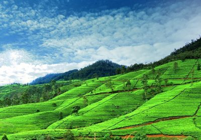 Nuwaraeliya city tour