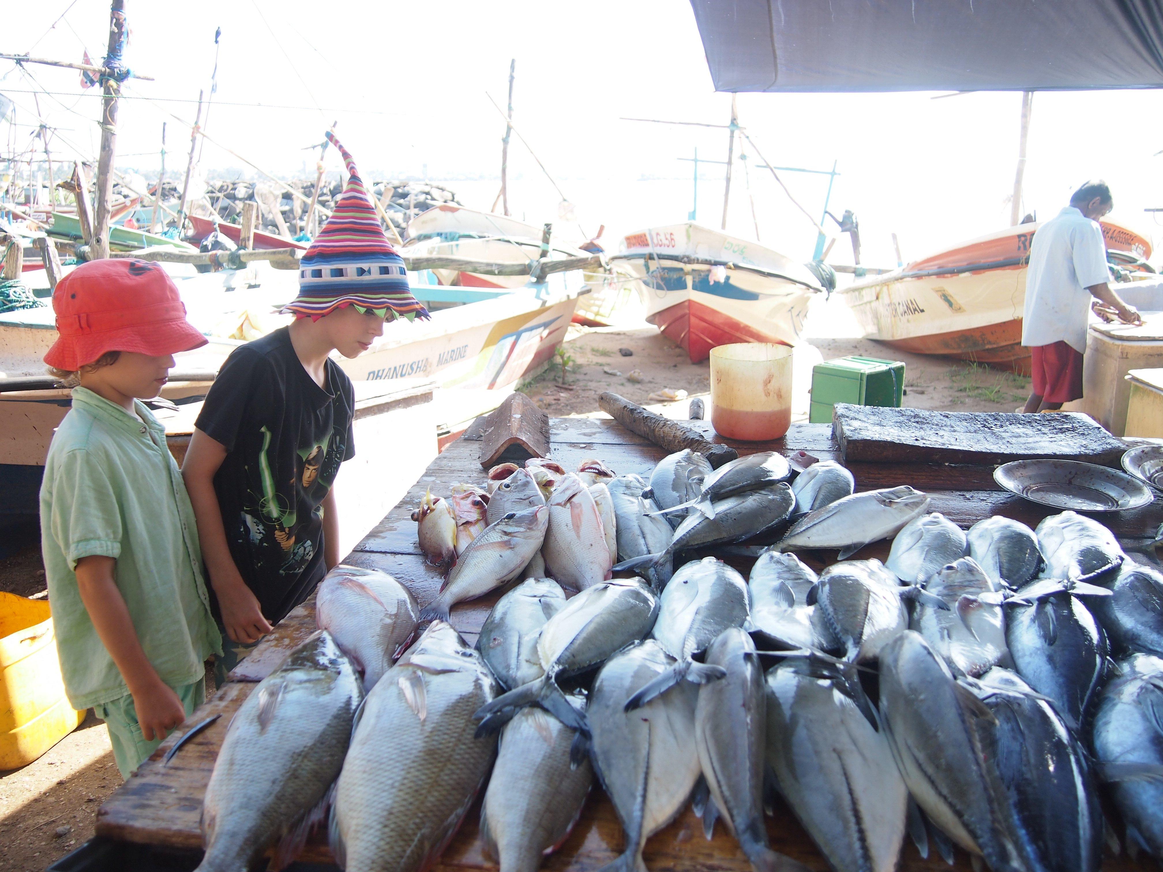 Sri Lanka Fish markets