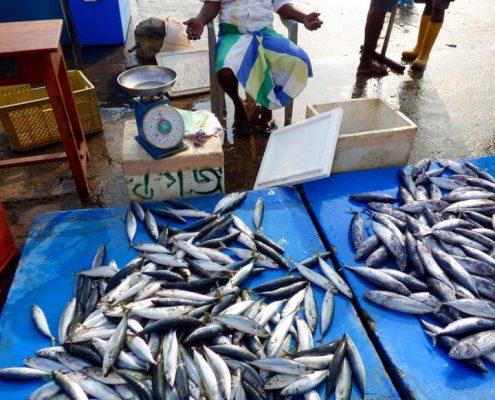 Near fish market around me
