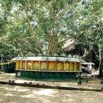 Bo Tree   Temple   Jetwing Holiday